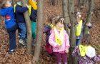 20. 11. – Raziskovanje gozda